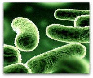 Probiotics are live bacteria that are extremely healthy for keeping our gastrointestinal tracts clean and optimal.