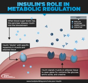 Insulin spikes and manipulation are key for altering your body composition