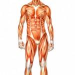 lean body2